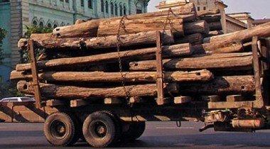 В Свердловской области сотрудник ГИБДД охранял ворованную древесину