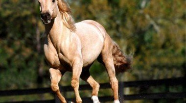 На Рублевском шоссе ловили лошадь