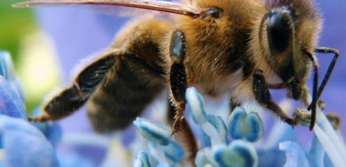В аварию попал трейлер перевозивший пчел