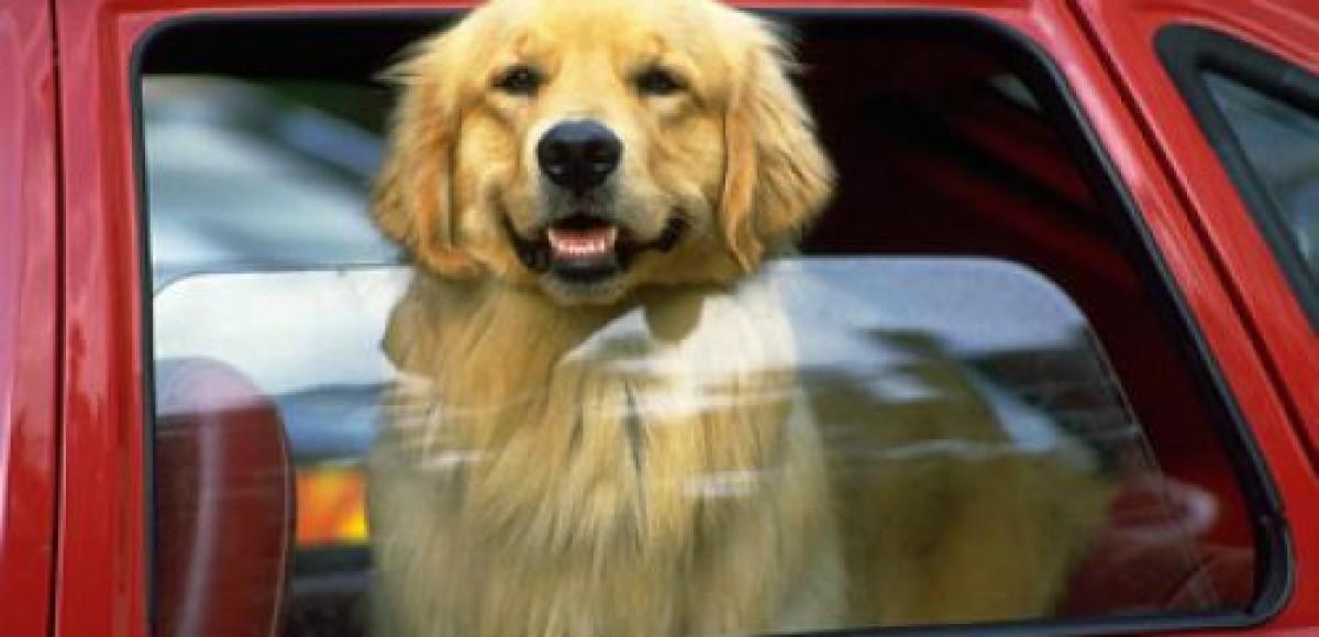 Volvo советует собакам… пристегиваться