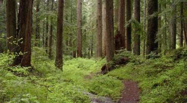 Общественная палата поддержала строительство дороги через Химкинский лес