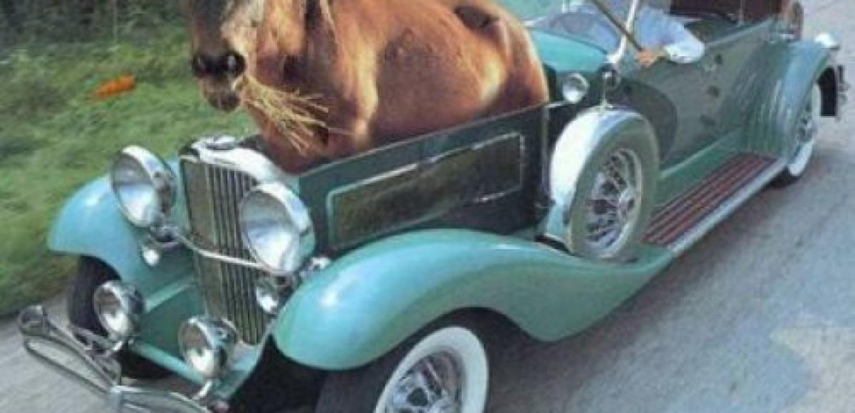 Араб изобрел экологический автомобиль мощностью в одну лошадиную силу