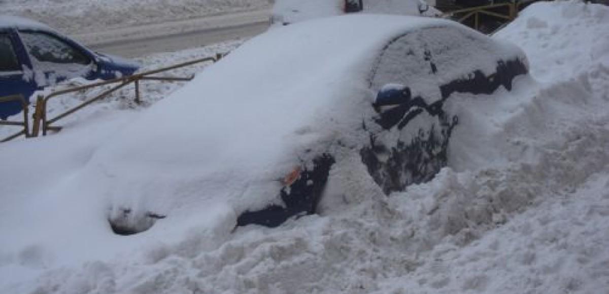В Ленинградской области нашли способ борьбы с «подснежниками»