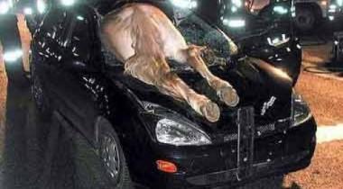 Виновницей повреждения трех иномарок в центре Москвы стала лошадь